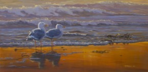 Mark z Hobson Glaucous Winged Gulls: Sunset Breeze