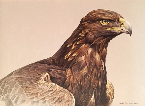 Robert z Bateman Golden Eagle Portrait