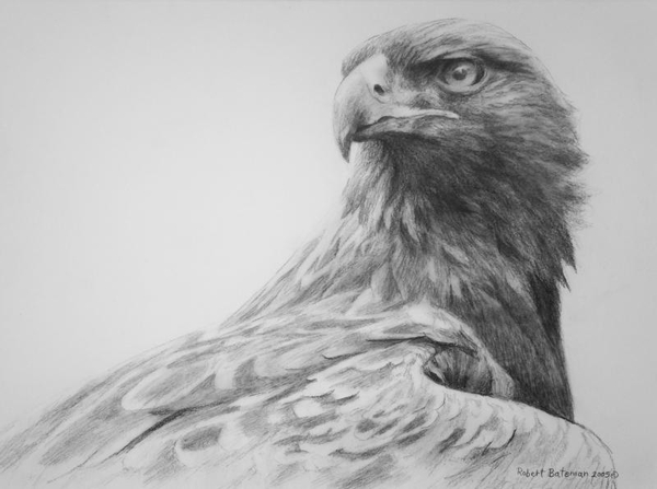 Robert z Bateman Golden Eagle