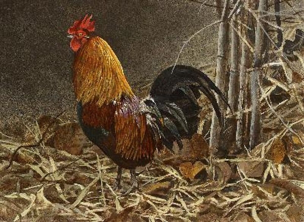 Robert z Bateman Red Jungle Fowl