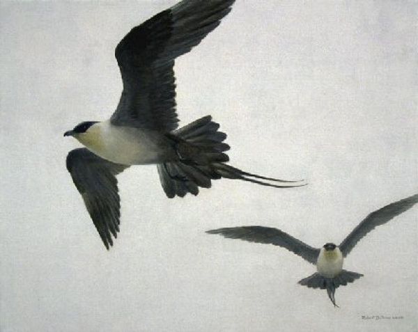 Robert z Bateman Long-tailed Jaegers