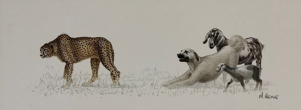 Cheetah with Dog and Goat