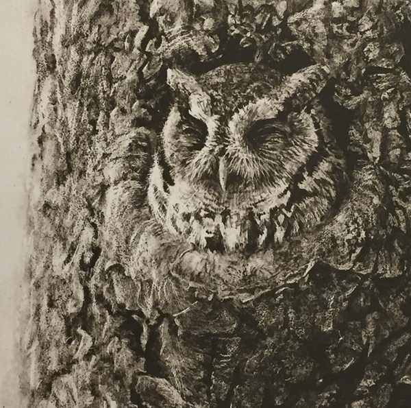 Robert z Bateman Screech Owl in Apple Tree