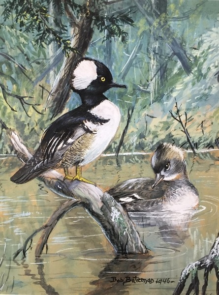 Robert z Bateman Hooded Merganser Pair
