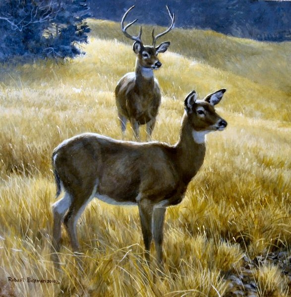 Robert z Bateman Buck Plus