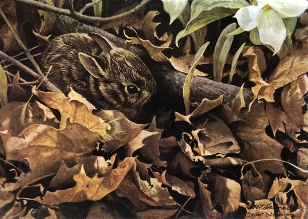 Robert z Bateman Among The Leaves – Cottontail