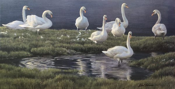 Robert z Bateman Bank Of Swans