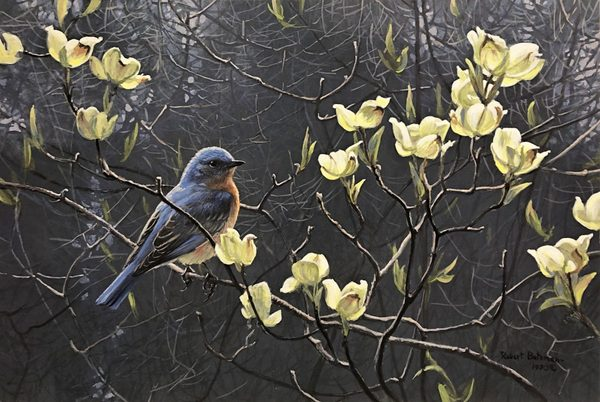 Robert z Bateman Bluebird and Blossoms