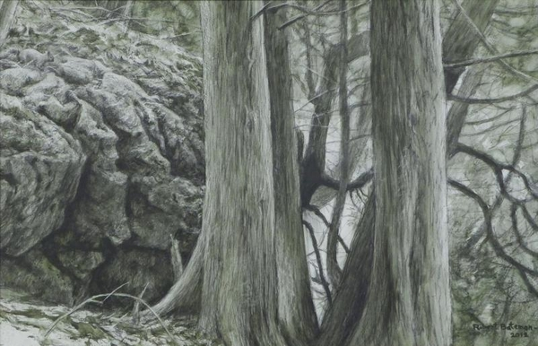 Robert z Bateman Grey Squirrel and White Cedars at Mount Nemo