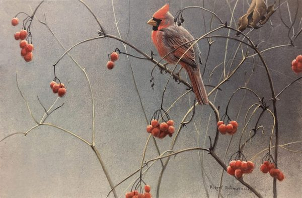 Robert z Bateman High Bush Cranberries Cardinal