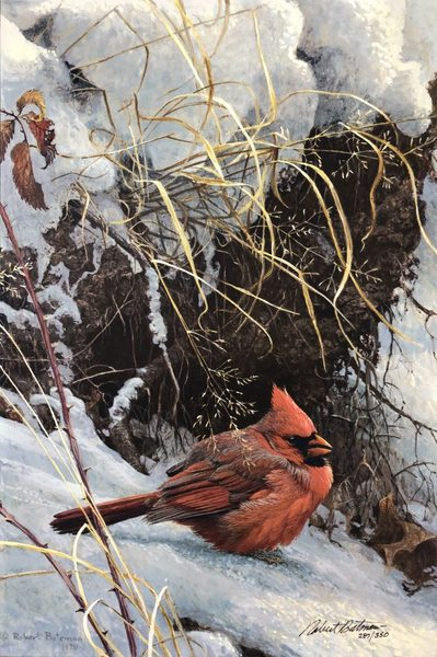 Robert z Bateman Winter Cardinal