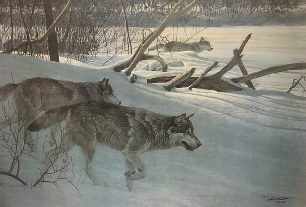 Robert z Bateman Wolfpack In Moonlight