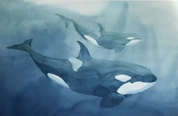 Orca by Sheena Lott