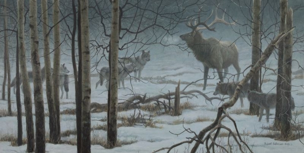 Robert z Bateman The Standoff - Elk & Wolves