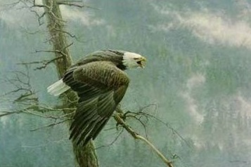 Robert Bateman The Air, The Forest and The Watch