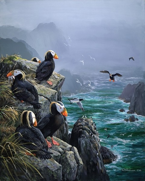 Mark z Hobson Tufted Puffins: Arrivals Lounge, Coronation Island, Alaska