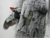 Robert Bateman Pileated Woodpecker