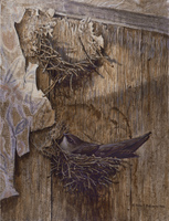 Robert z Bateman Chimney Swift on Nest