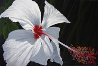 Dennis z Magnusson Reaching Out - White Hibiscus