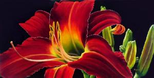 Dennis z Magnusson Daylily Delight