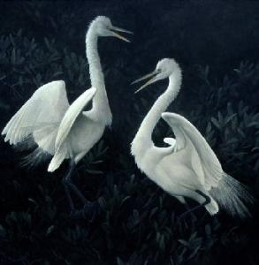 Robert z Bateman Great Egrets Fighting