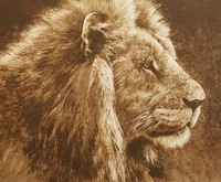 Robert z Bateman Lion Head