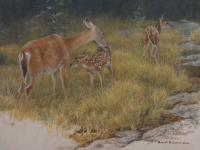 Robert z Bateman Deer Family - Mother and Young