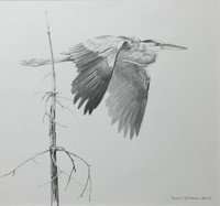 Robert z Bateman Great Blue Heron Flying
