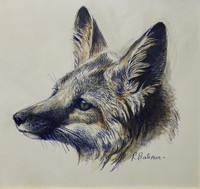 Robert z Bateman Swift Fox