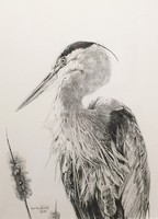 Rod Frederick Great Blue Heron