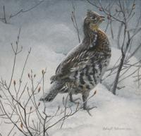 Robert z Bateman Ruffed Grouse in Snow