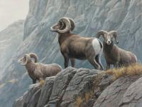 "Robert z Bateman ""Surveying - Big Horn Sheep"""